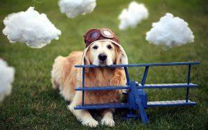 27-02-17-dog-airplane-helmet10960