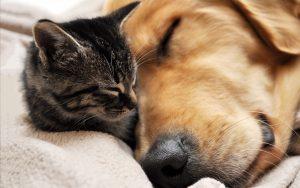 27-02-17-dog-cat-sleep-cuddle10516