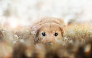 27-02-17-dog-field11744