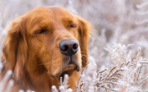 27-02-17-dog-friend-nature-winter16864