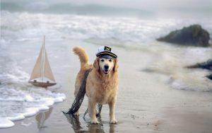 27-02-17-dog-sea-ship-beach14790