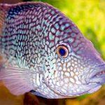 27-02-17-fish-aquarium14564