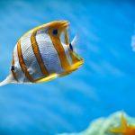 27-02-17-fish-wallpaper8180