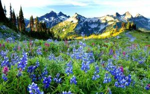 27-02-17-flowers-landscape6705