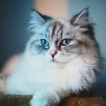 27-02-17-fluffy-cat14006