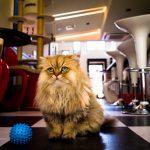 27-02-17-fluffy-cat16270