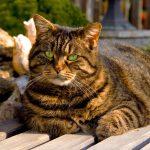 27-02-17-fluffy-fat-cat12356