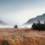 27-02-17-foggy-grass-landscape14973