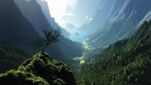 27-02-17-forest-landscape-pictures13569
