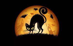 27-02-17-full-moon-cat11809