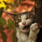 27-02-17-funny-cat-bite15614