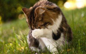 27-02-17-funny-cat-paw16469