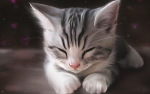 27-02-17-funny-cat-sleeping10111