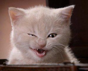27-02-17-funny-cat11048