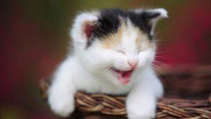 27-02-17-funny-cat15978