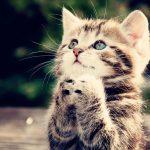 27-02-17-funny-cat16789