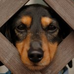 27-02-17-funny-dog17455