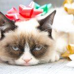 27-02-17-grumpy-cat15900