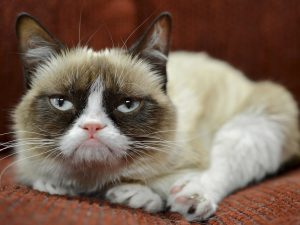 27-02-17-grumpy-cat18128