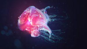 27-02-17-jellyfish-wallpaper8177
