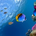 27-02-17-marine-fish-wallpaper17373