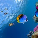 27-02-17-marine-fish-wallpaper17373
