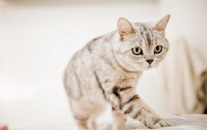 27-02-17-photography-cat14941