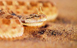 27-02-17-rattlesnake7588