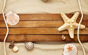 27-02-17-sand-shells-snail-starfish-beach17517