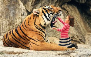 27-02-17-say-aah-tiger13885