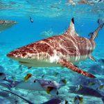 27-02-17-sea-underwater-fish-world13746