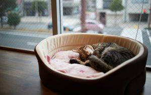27-02-17-sleep-cat-carrier11856