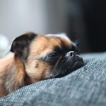 27-02-17-sleeping-dog-wallpaper9574