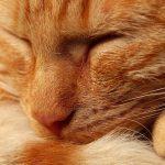 27-02-17-sleeping-red-cat12013