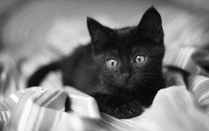 27-02-17-small-black-cat6223