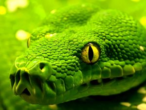 27-02-17-snake-wallpapers15141