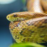 27-02-17-snake14530