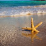 27-02-17-starfish-beach-sand18467