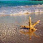 27-02-17-starfish-beach-sand18467