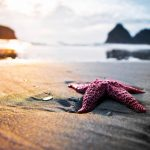 27-02-17-starfish-on-the-beach12733
