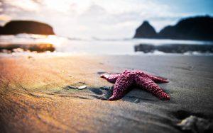 27-02-17-starfish-on-the-beach12733