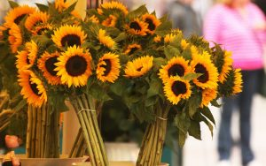 27-02-17-sunflowers-bouquets-flowers11561