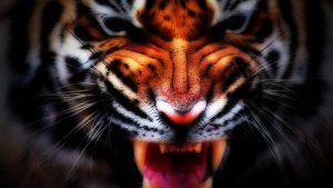 27-02-17-tiger-face-wallpaper16632