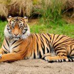 27-02-17-tiger16131