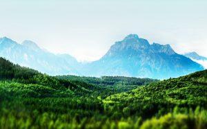 27-02-17-tilt-shift-forest-landscape13684