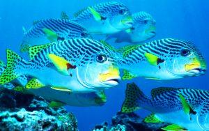 27-02-17-underwater-fish-world12935
