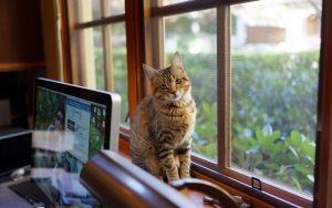 27-02-17-window-cat-look10880