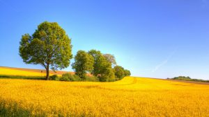 27-02-17-yellow-landscapes15138