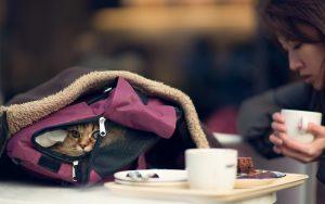 28-02-17-bag-cat-asian-girl-photo15458
