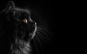28-02-17-black-cat-wallpaper9581